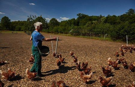 Nur das Beste: unsere Hühner erhalten 100% Bio-Futter!