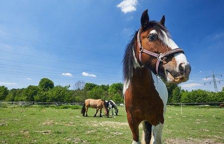 Die Pferde auf unserem Hof genießen viel Platz.